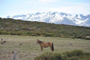 Rutas a caballo Gredos